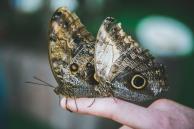 Motyle na ręce